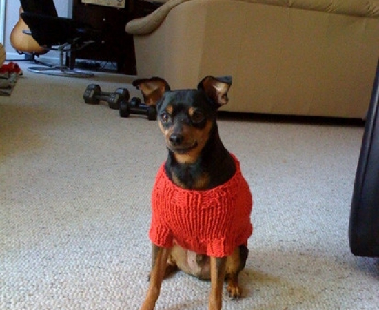 Diesel_in_sweater[1]