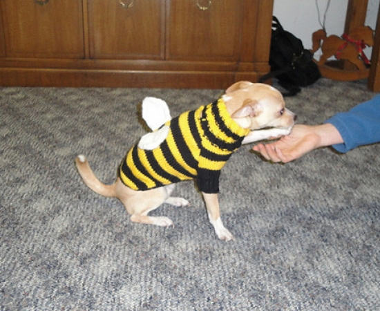 Ike's Bumble Bee Sweater