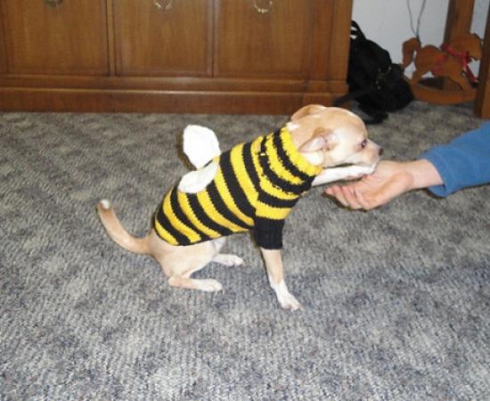 Ike's Bumble Bee Sweater